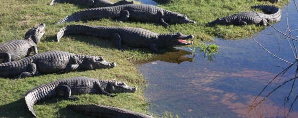 pantanal brazilie tour